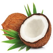 <strong>Cocos nucifera</strong>